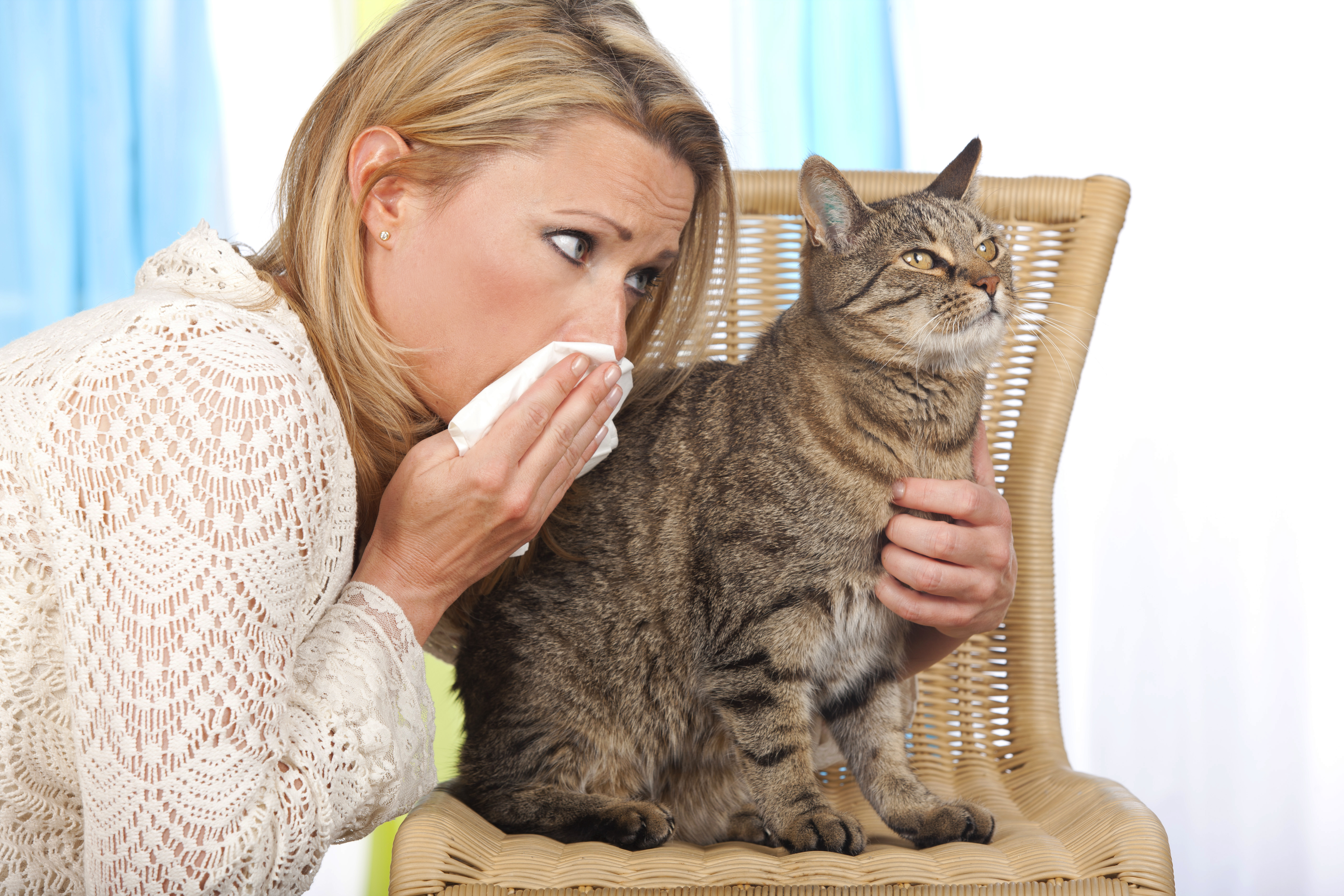 Pet Allergies: Tips To Help With Your Allergy | Austin TX